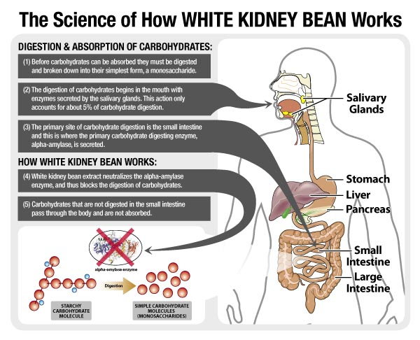 Is White Kidney Bean Extract Good for Weight Loss?