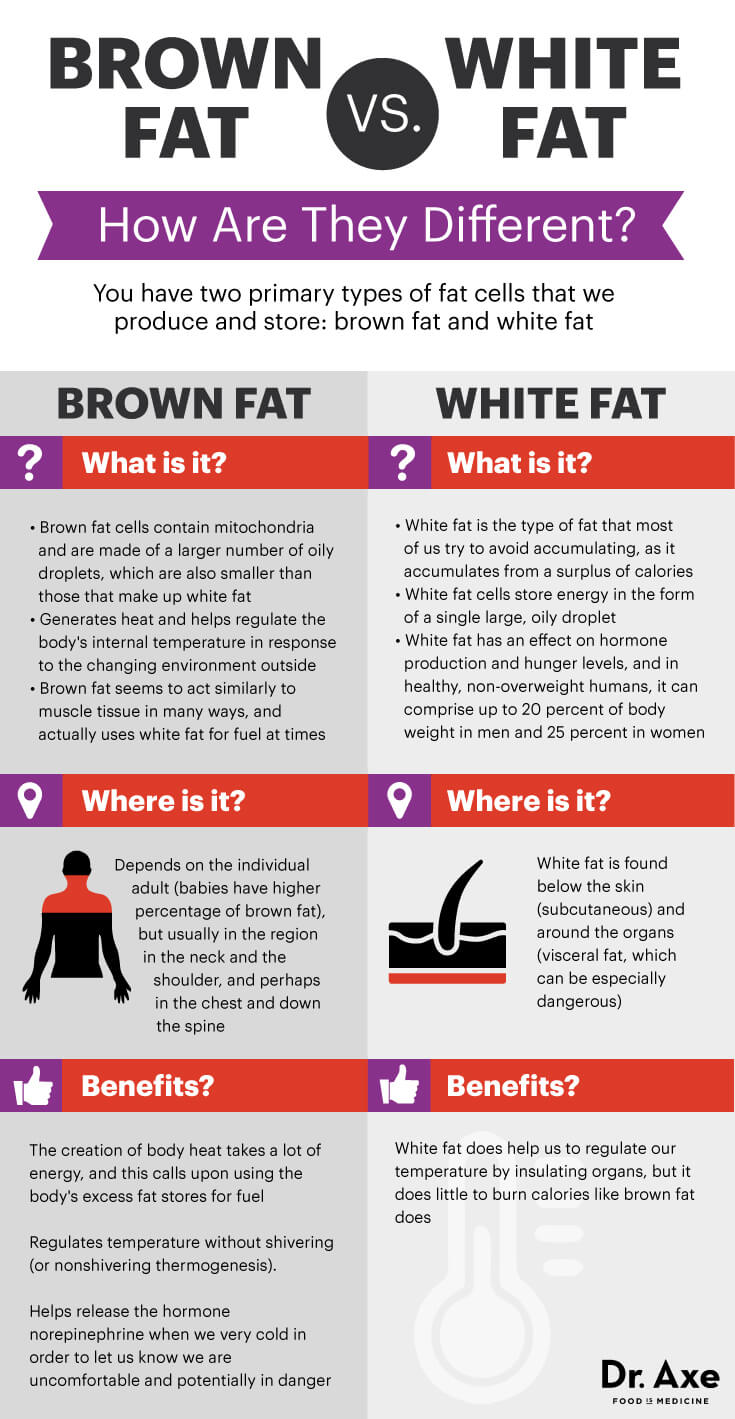 brownfatgraphic