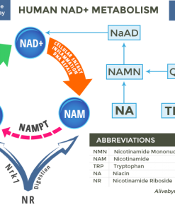 NAD-metabolism-in-humans2