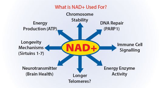 Boosting Your NAD+