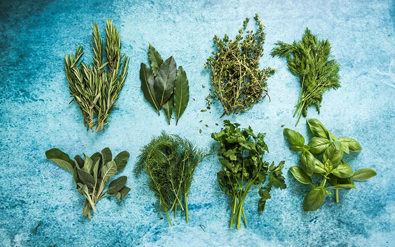 the encyclopedia of popular herbs from the herb research foundation your complete guide to the leading medicinal plants