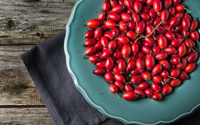 Rose Hips Don T Lie Top Benefits Of This Superfood Alivebynature