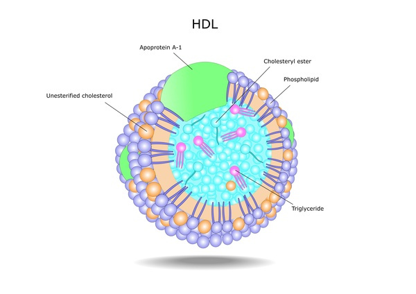 high-density-lipoprotein-hdl