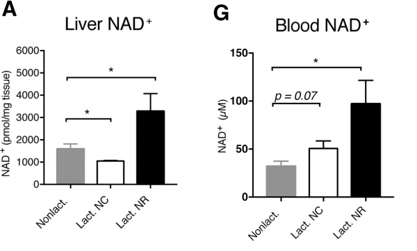lactating-mice-nad-levels-600x361.png